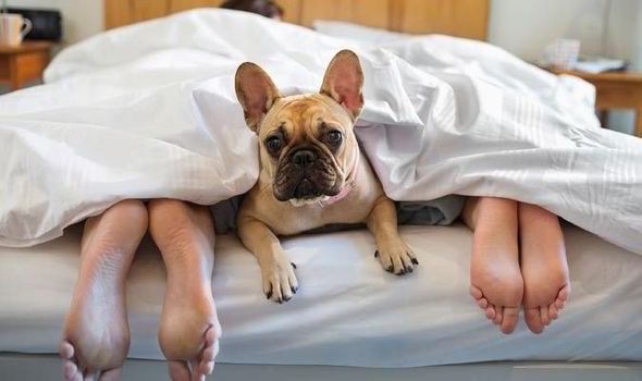 Great Tips to Choose a Pet-Friendly Hotel