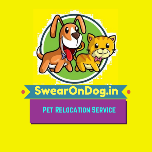 Best Pet Relocation Service in Bangalore